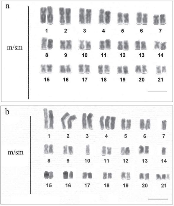 42 and 2 chromosomes