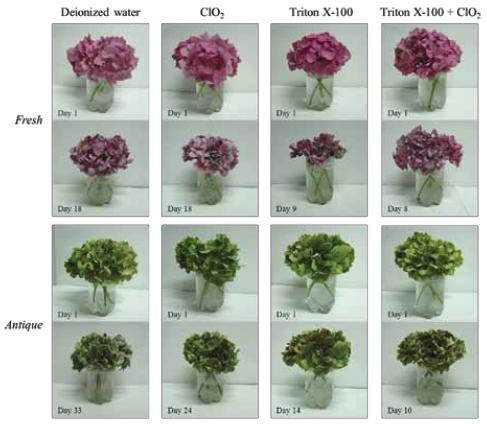 preserving cut flowers with different solutions Preserving and drying flowers is a craft that has been honed over preserving flowers: six ways of drying flowers different methods for preserving or drying.