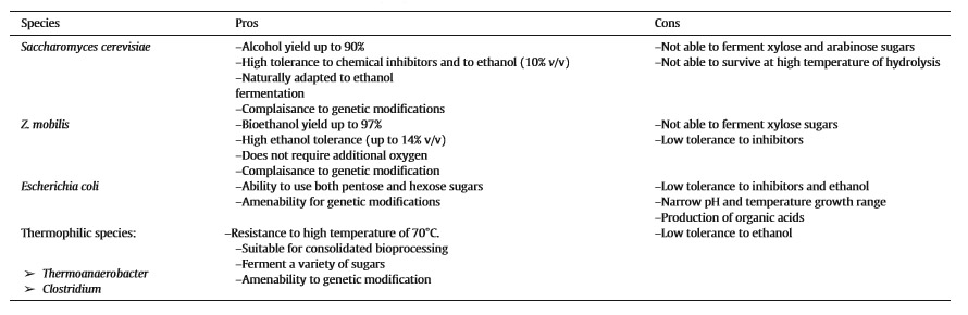 Consolidated Briefing Of Biochemical Ethanol Production From