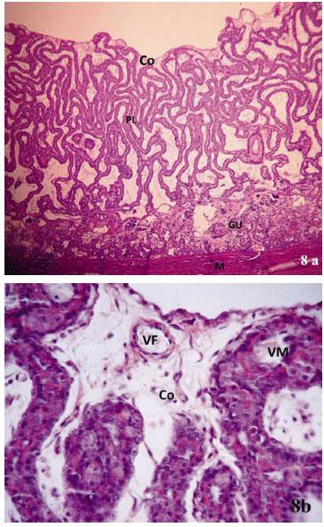 Placenta: Anatomía e Histología Comparada