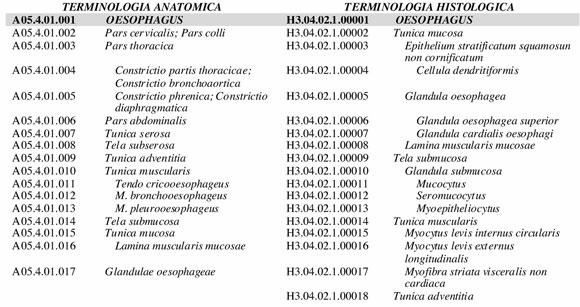 Terminologia Anatomica y Terminologia Histologica: Un Lugar de ...