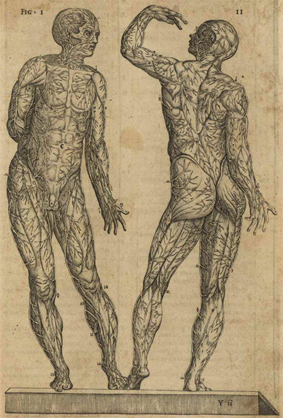 El Anatomista Español que se Atrevió a Rectificar a Vesalio: Juan ...
