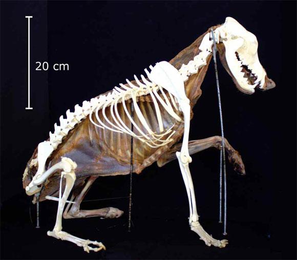 Combinación de Osteotecnia más Conservación de Músculos en Montaje ...