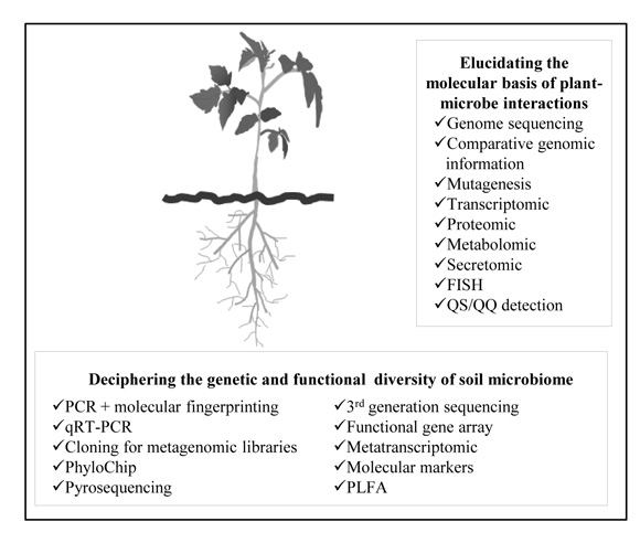 Genes Involved in Microbe-Plant Interactions