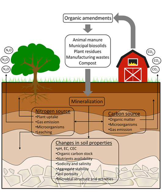 Organic amendments as sustainable tool to recovery fertility