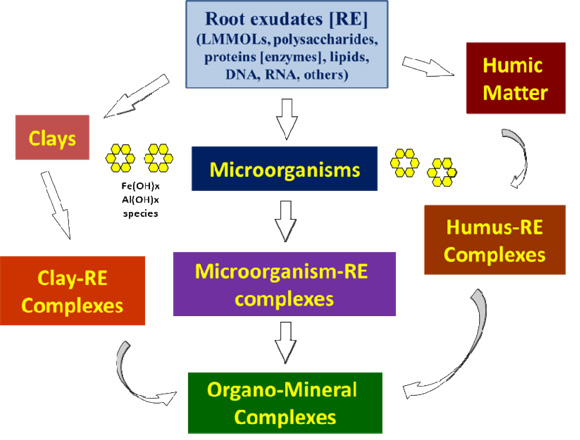 Biogeochemical processes at soil root interface for Importance of soil minerals