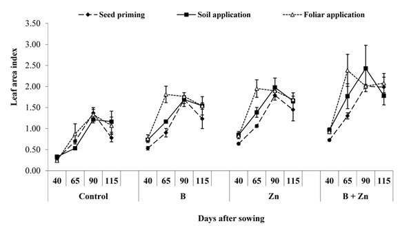 Foliar application of Zinc and Boron improved the