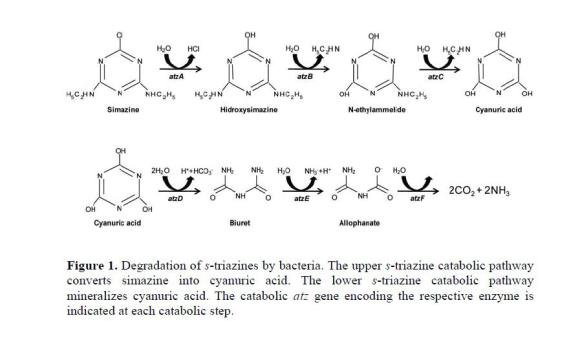 bacterial degradation and bioremediation of chlorinated herbicides
