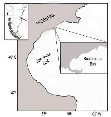 Biología Reproductiva Del Cangrejo Araña Leucippa Pentagona