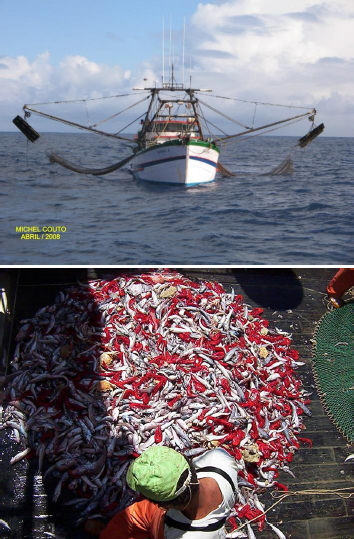 Pathways for sustainable industrial fisheries in southeastern and