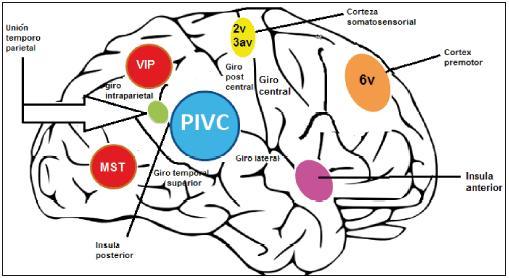 Anatomía, fisiología y rol clínico de la corteza vestibular