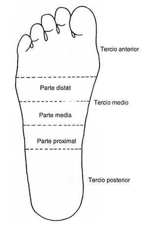 ARCO PLANTAR SUPERFICIAL EN EL HOMBRE: CARACTERISTICAS ANATOMICAS Y ...