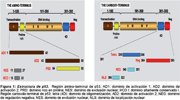 polimorfismo del gen bax en diabetes