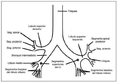 Anatomía radiológica del tórax