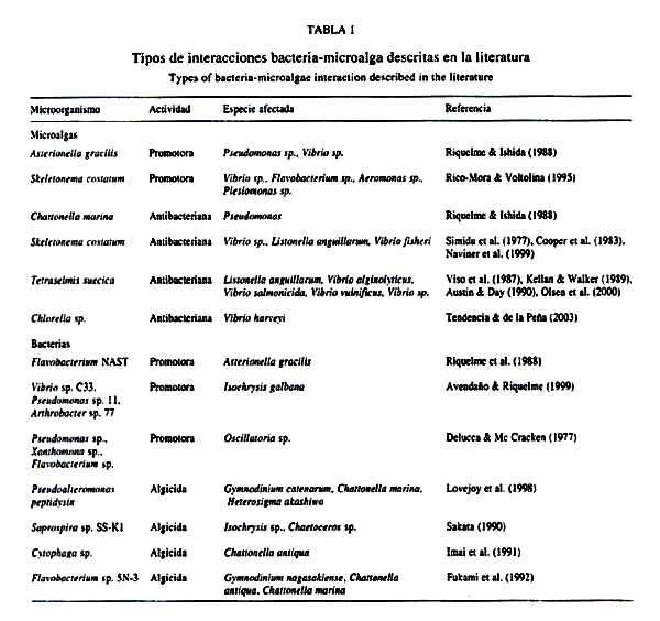 Estructura bacteriana externa e international dating