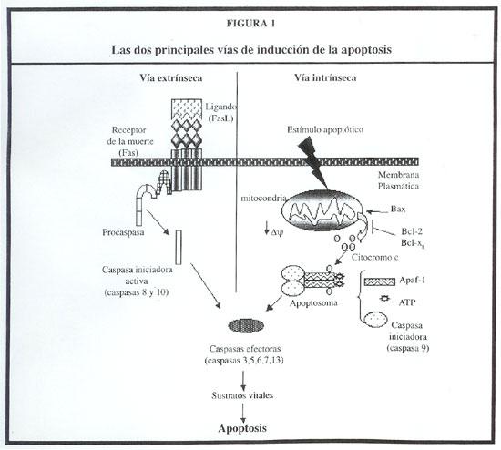 acción nutricional cáncer de próstata