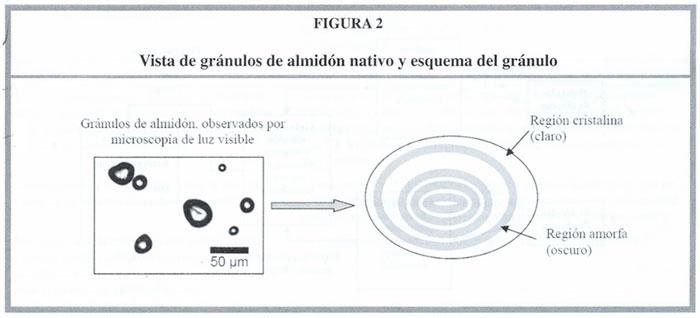 Relación Entre La Respuesta Glicémica Del Almidón Y Su