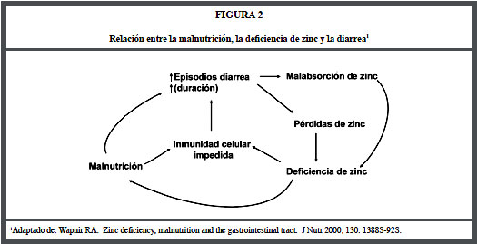 metabolismo del zinc pdf