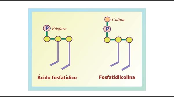 Fosfolípidos De Origen Marino Una Nueva Alternativa Para La