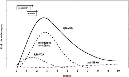 citomegalovirus anticuerpos igg reactivo