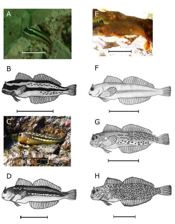 Patrones de coloración de dos especies del género