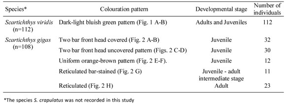 Patrones de coloración de dos especies del género Scartichthys ...