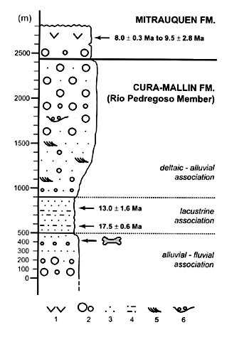 A Miocene Toxodontid Mammalia Notoungulata From The Sedimentary