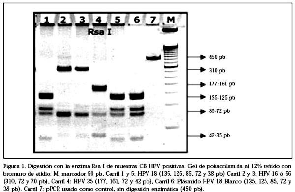 papiloma virus por pcr co je giardia