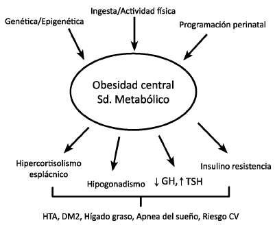 Cuales son los factores que influyen en la obesidad