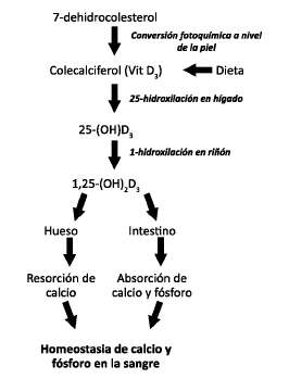 Deficiencia de vitamina D: ¿Factor de riesgo de síndrome..