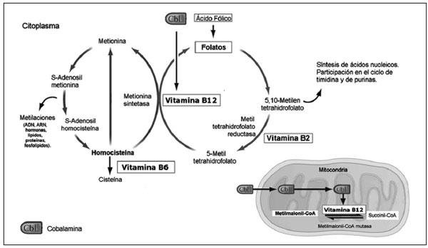 vitamina b6 metabolismo pdf