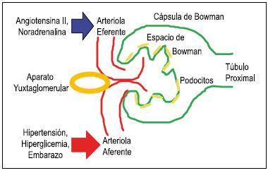 albumina en orina valores normales