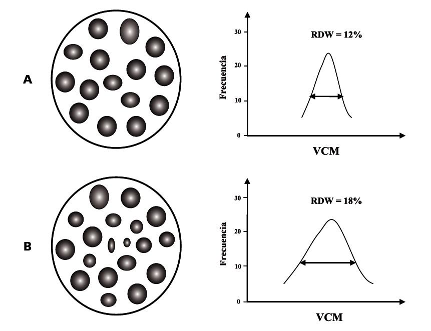 Corpuscular medio calculo volumen