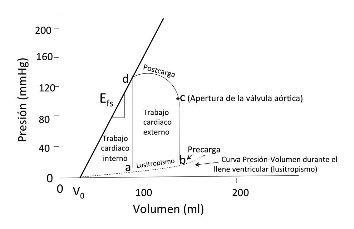 Contractilidad ventricular: Fisiología y proyección clínica