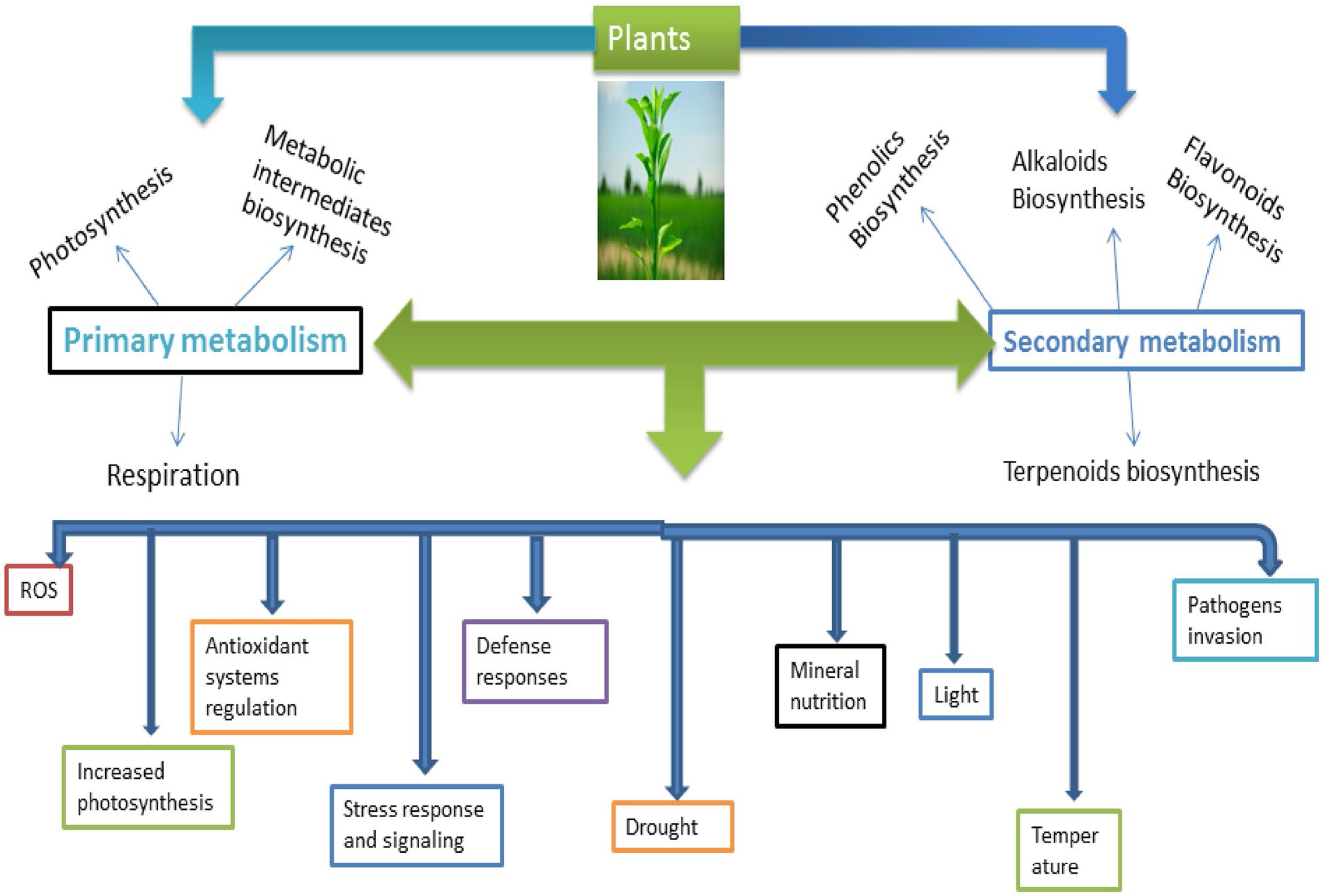 Stress And Defense Responses In Plant Secondary Metabolites Production
