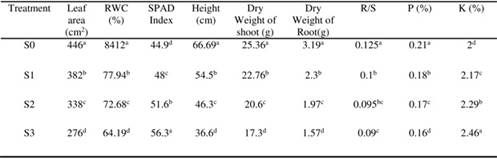 Efficiency of Rhizobium strains as plant growth promoting