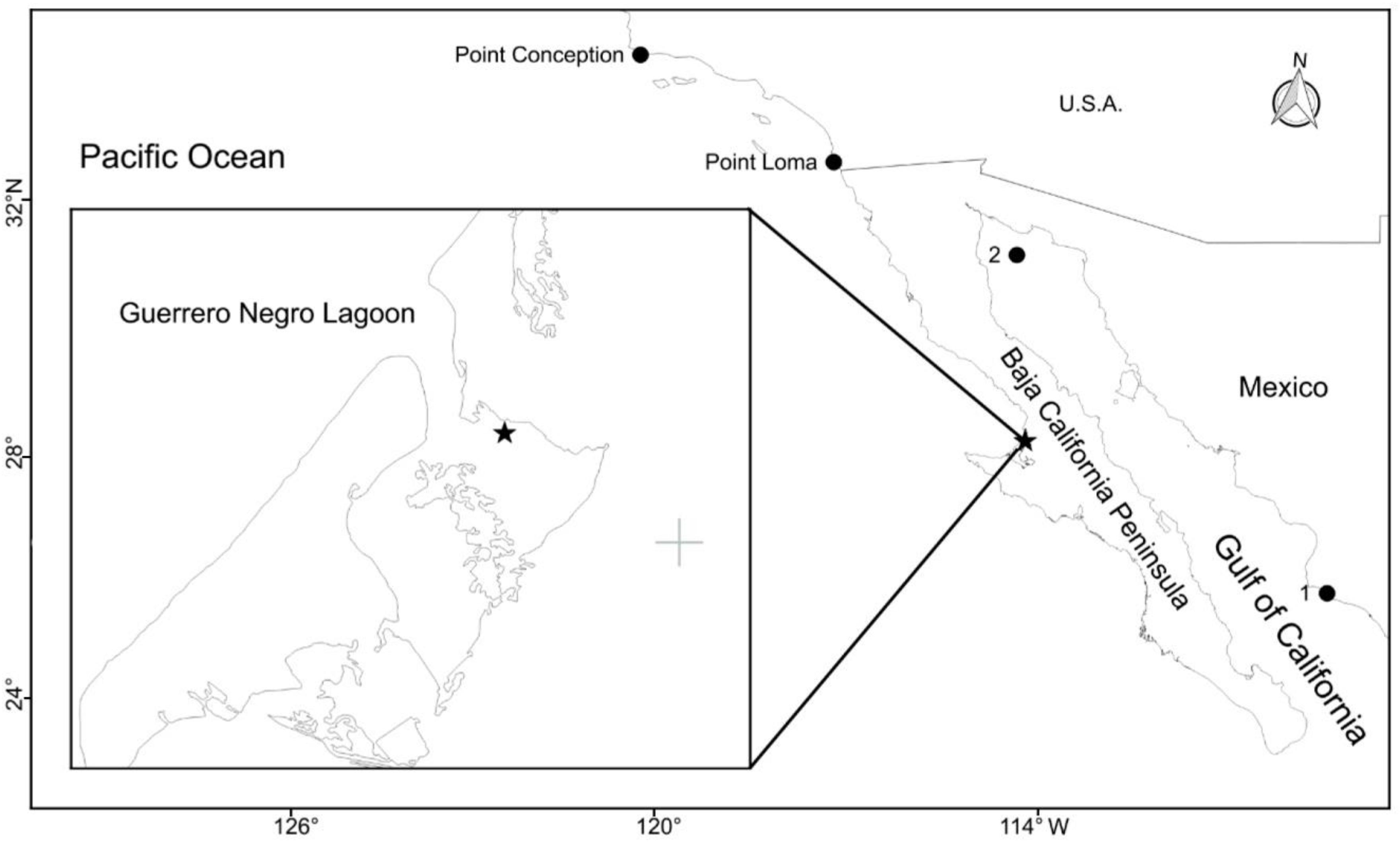 ... reported of Neastacilla californica () on the Pacific coast and in the  Gulf of California. 1 Topolobampo Bay, 2 Roca Consag. Black star shows the  ...