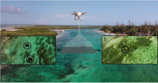 Using a small, consumer-grade drone to identify and count marine